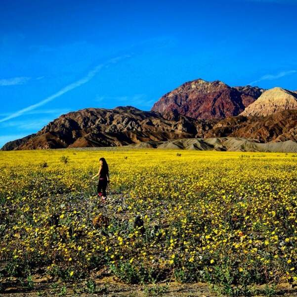 Les plaines se couvrent de jaune…