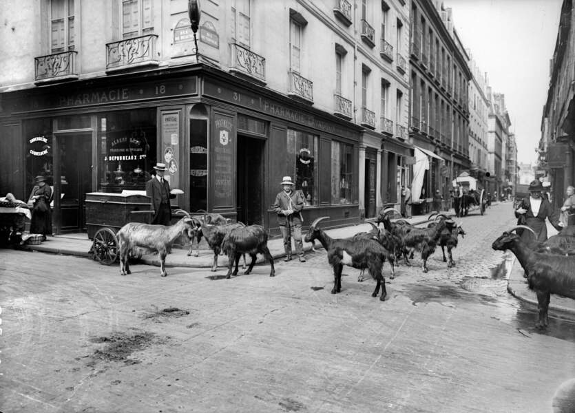 Vendeur de lait de chèvre, 1900-1910.