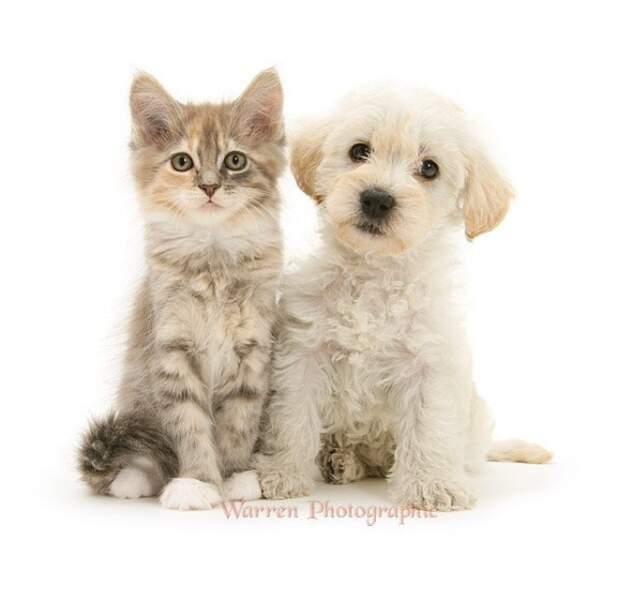S'entendre comme chien et chat : la fin d'un dicton ?