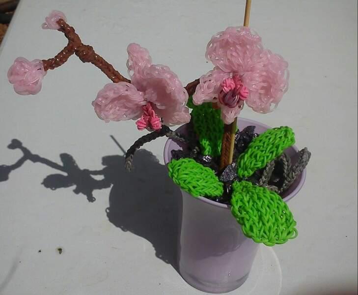 L'orchidée par Véronique