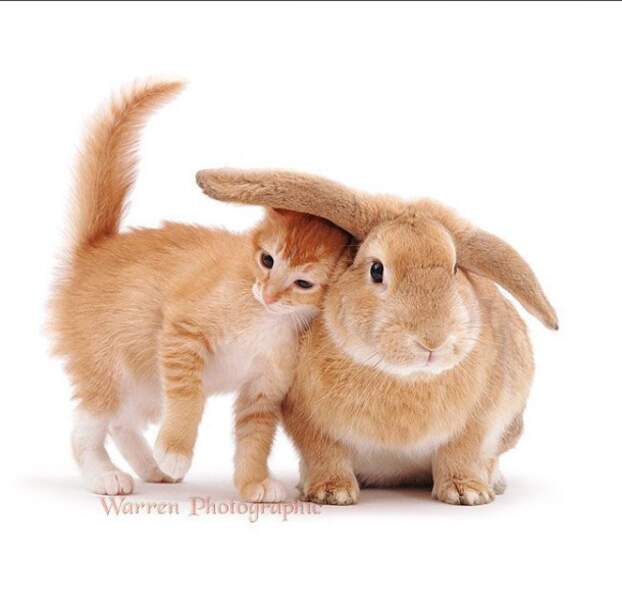 Je peux me cacher sous ton oreille ?