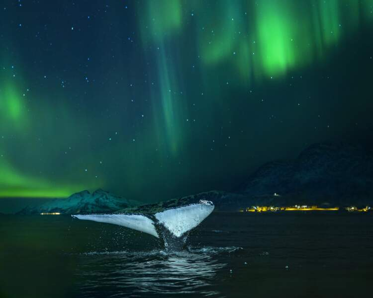 Quand une baleine s'invite dans le cadre...