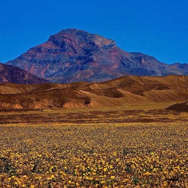En général, la floraison de ce désert débute au printemps.