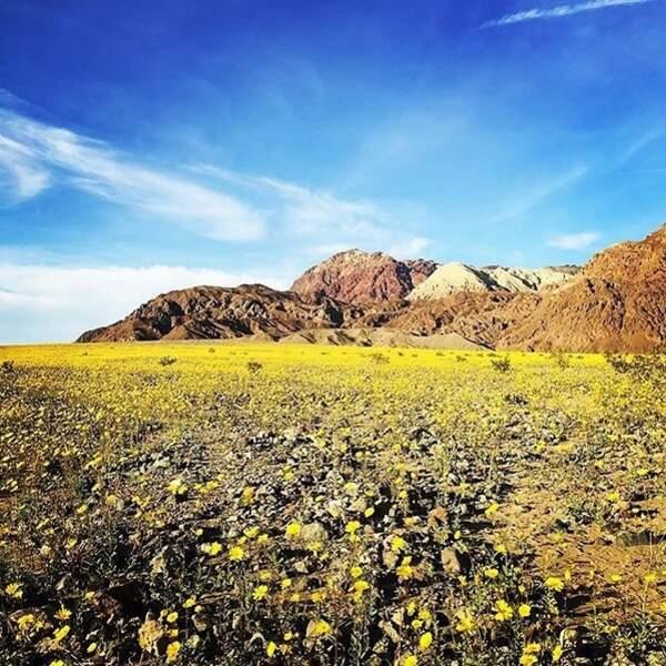 Dans cette zone, la plus chaude du monde, la température peut monter jusqu'à 57°C.