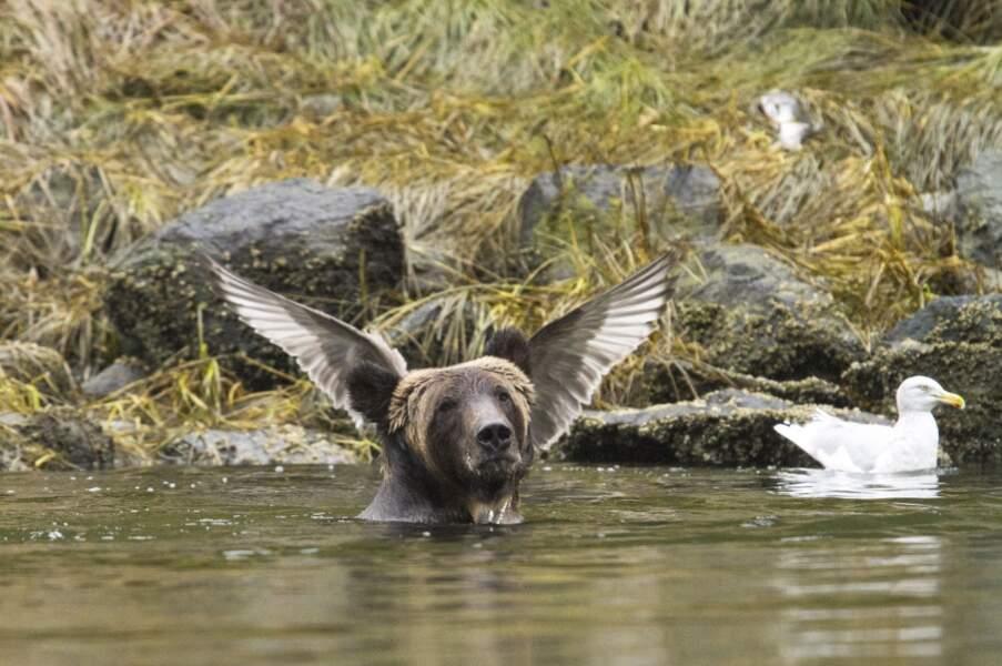 Un ours ailé ou un oiseau gros comme un ours ?