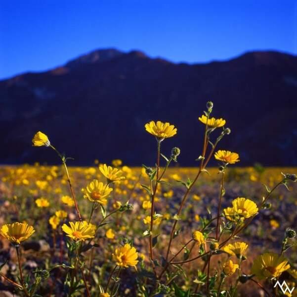 Il peut se passer dix ans sans qu'une fleur ne pousse dans ces conditions arides.