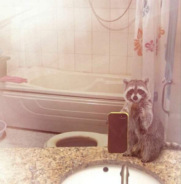Le raton laveur toujours dans la salle de bains