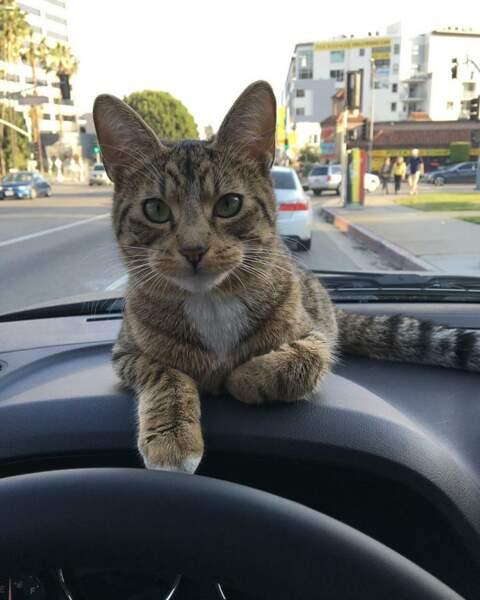 Attention à la route quand même !