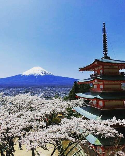 Le mont Fuji et les cerisiers, deux symboles du Japon sur un même cliché