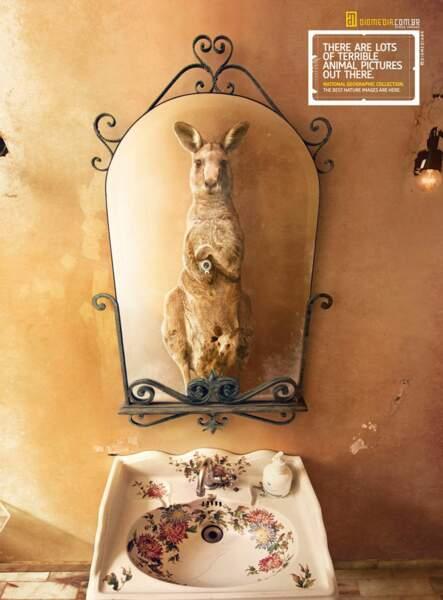 Le kangourou dans la salle de bains