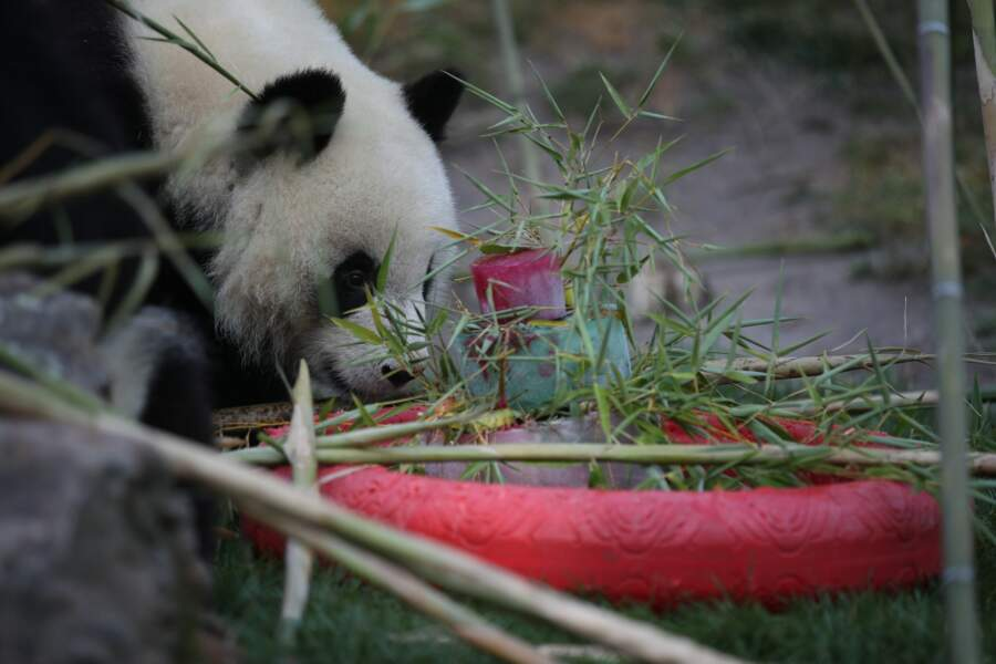 Un gâteau pour le deuxième anniversaire du panda