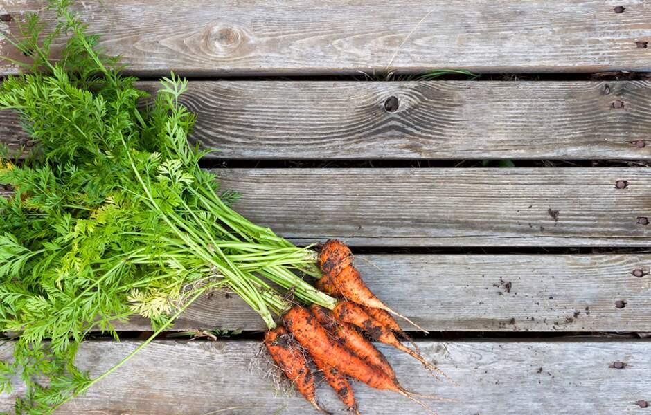 Des fanes de carottes au secours des aphtes