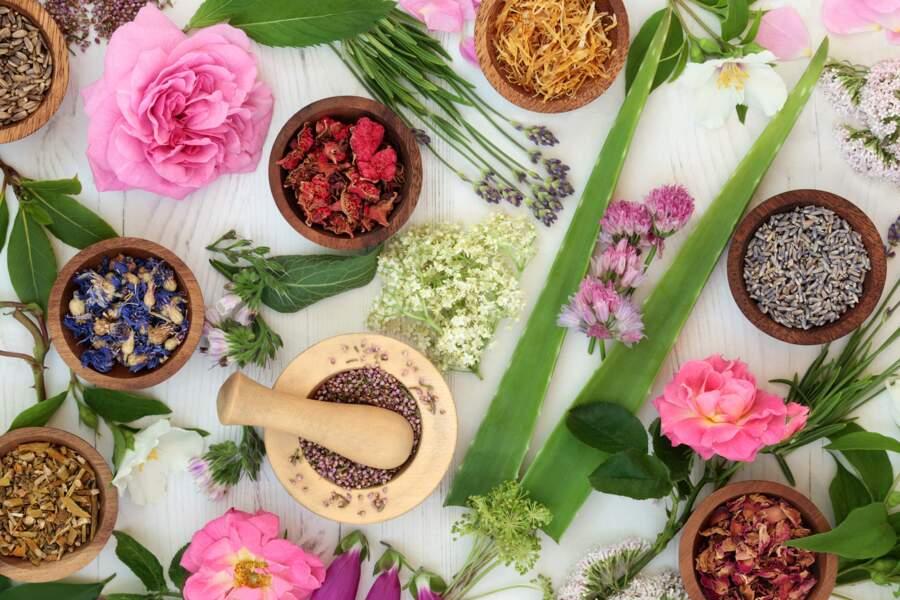 Le rituel médiéval : les remèdes à base de plantes