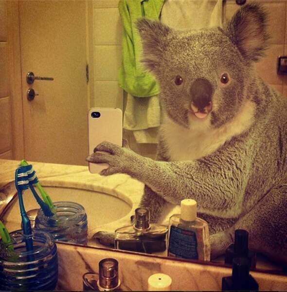 Le koala dans la salle de bains
