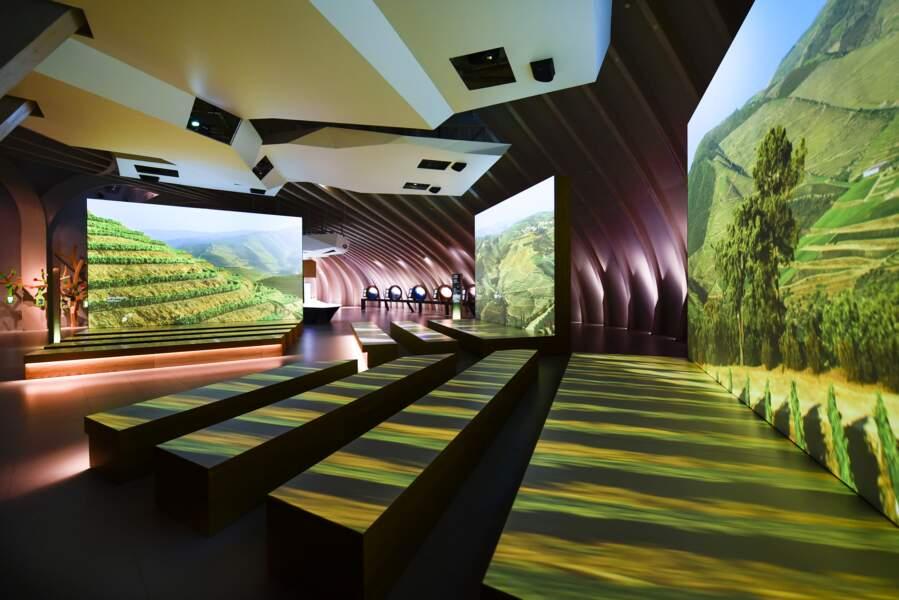 Le tour du monde des vignobles