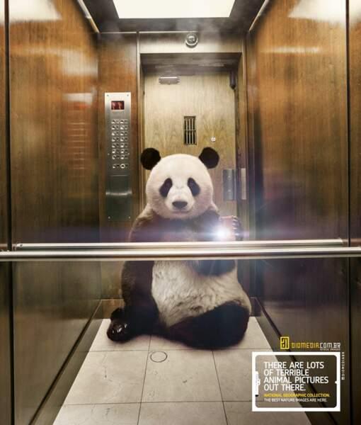 Le panda dans l'ascenseur