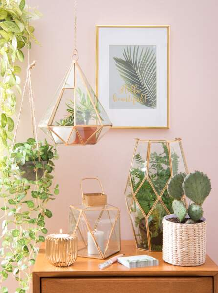 rose poudré et cactus