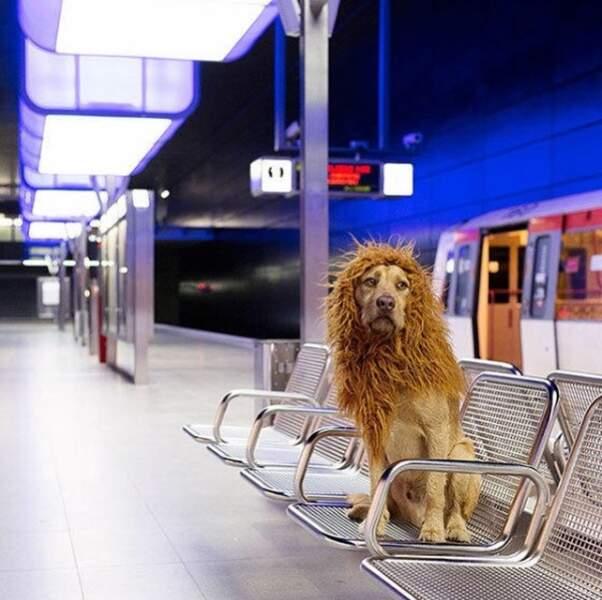 Elle a décidé de l'adopter et de le ramener avec elle à Hambourg