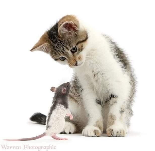 Les chats et les souris peuvent aussi être amis !