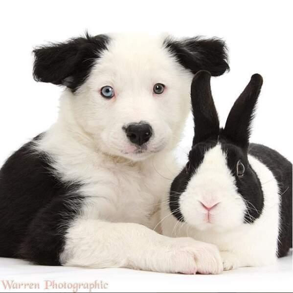 Deux petites bêtes qui ne veulent pas être séparées !