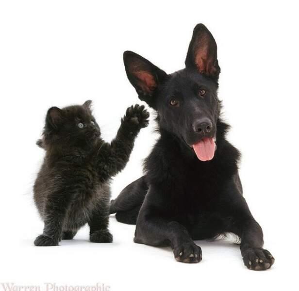 Un petit chat intrigué par l'oreille de son copain