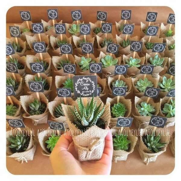 Un cactus dans un pot