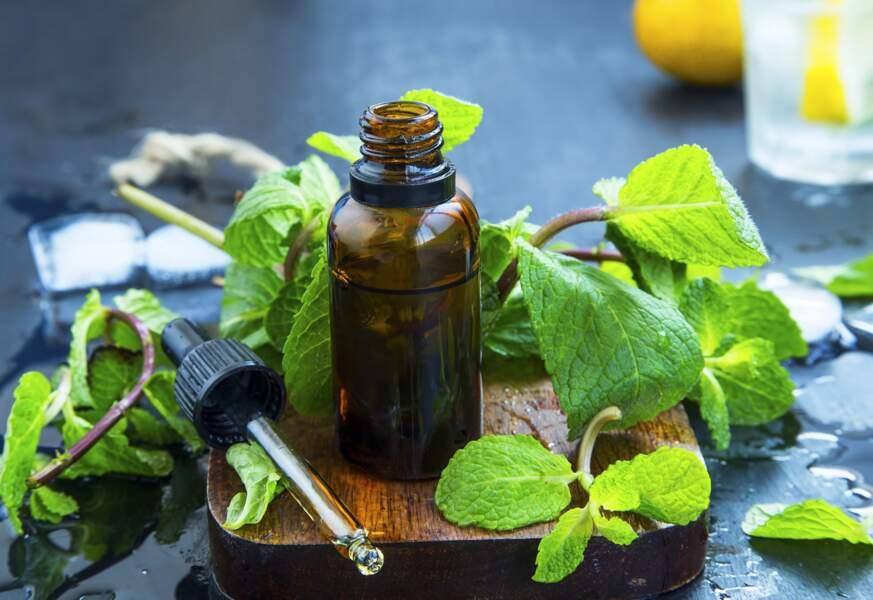 L'huile essentielle de Niaouli