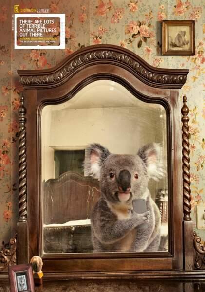 Le koala dans la chambre