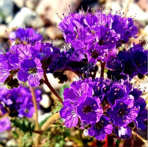 Coquelicots, lilas, primevères, tournesols… d'autres fleurs envahissent aussi les plaines.