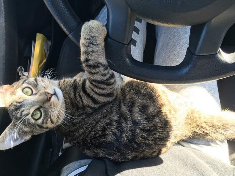 Tu me laisses conduire ?