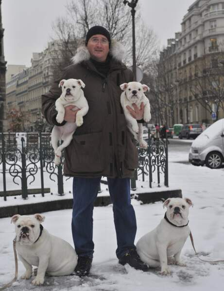 Trésor, le bulldog anglais