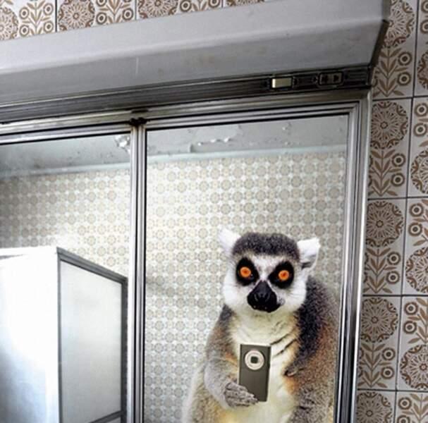 Le lémurien devant le miroir