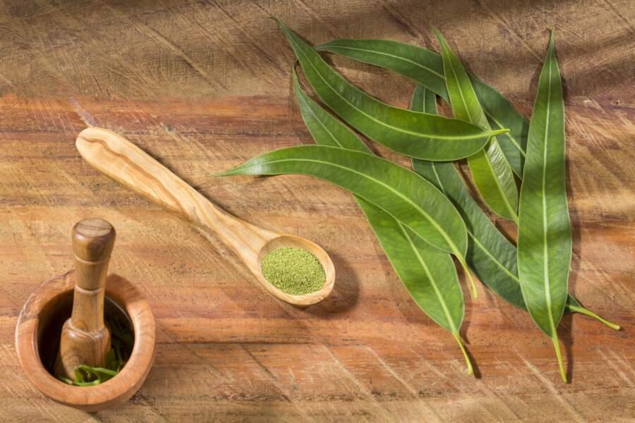 L'eucalyptus globuleux : en cas de troubles respiratoires