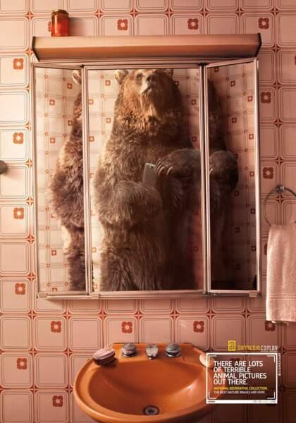 L'ours devant le miroir