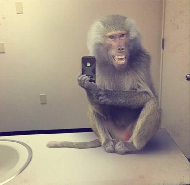 Le singe dans la salle de bains