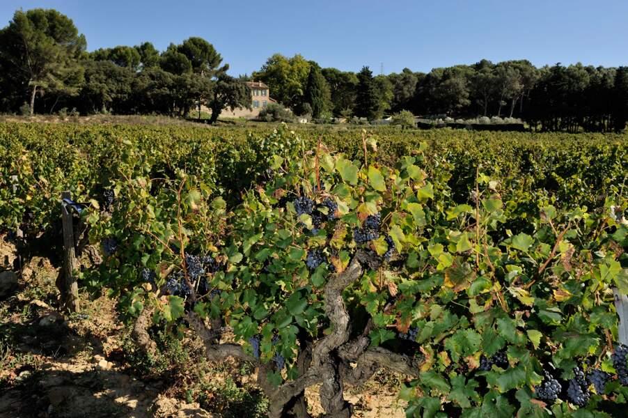 Vigneron d'un jour au Château Maucoil