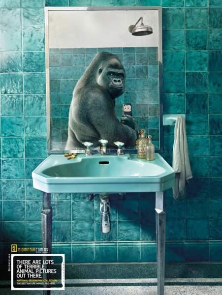 Le gorille dans la salle de bains