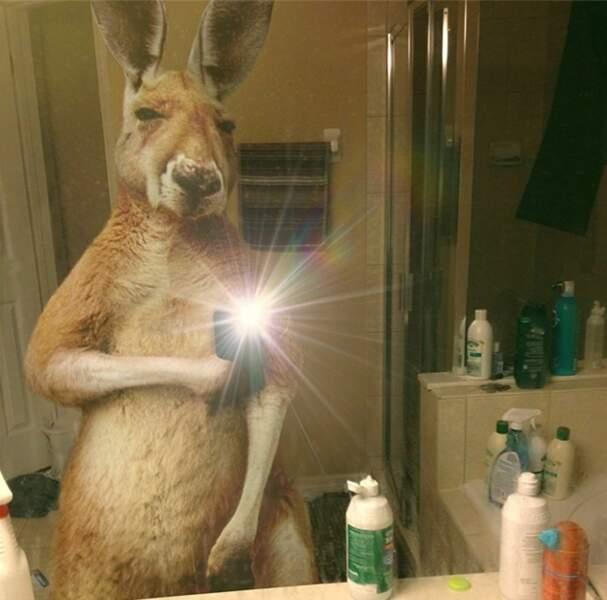 Le kangourou pose devant le miroir de la salle de bains