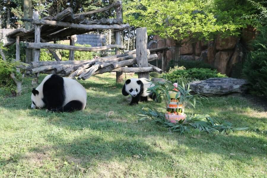 Yuan Meng fête ses un an