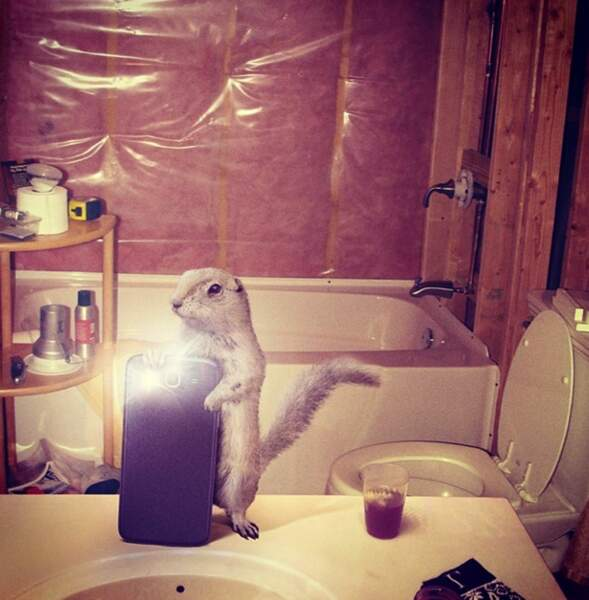 L'écureuil dans la salle de bains