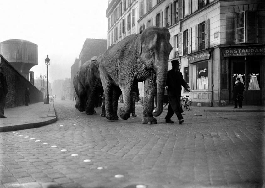Eléphants dans les rues de Paris, mars 1941.