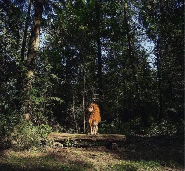 Sa propriétaire, la photographe allemande Julia Marie Werner, l'a trouvé abandonné lors d'un shooting en Espagne