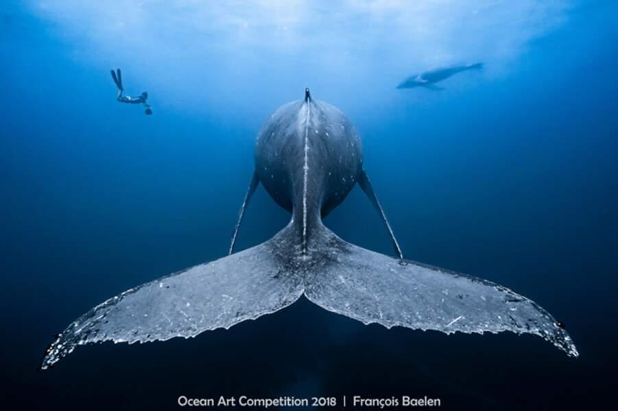 Rencontre avec un géant des mers...
