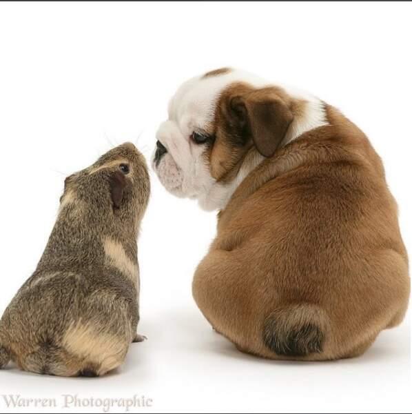 Deux petits amis qui ont un secret à se dire...