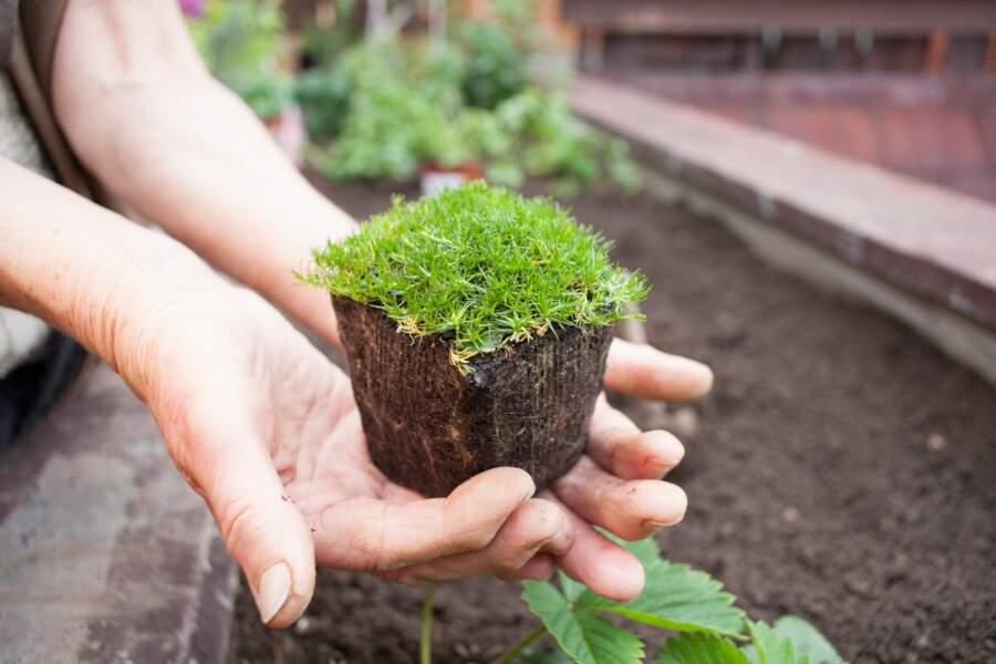 Jardiner, même sans jardin