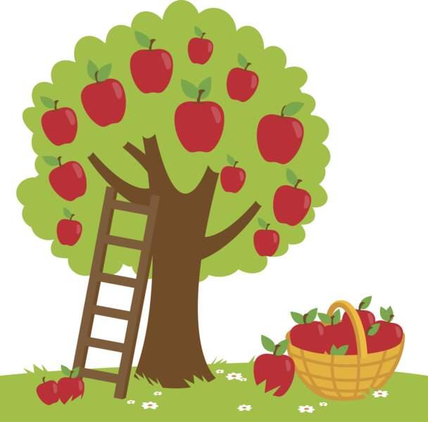 Pomme de reinette et pomme d'api