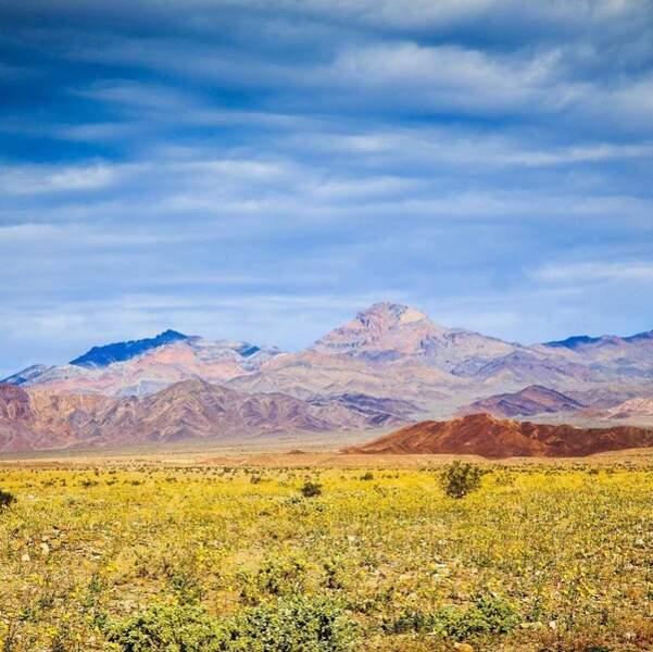 La célèbre vallée, située en Californie, est plus vivante que jamais !
