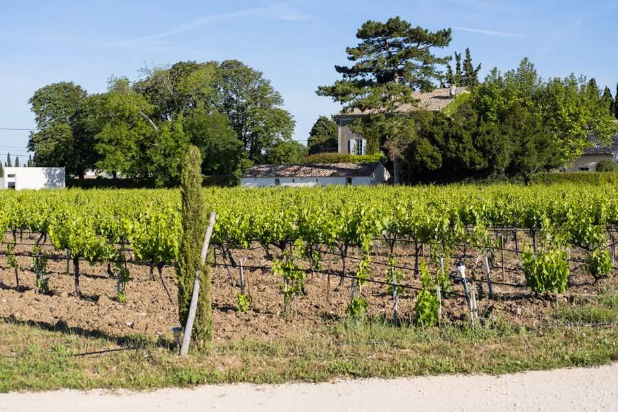 Dégustation ou régime détox au raisin au Domaine de L'Odylée