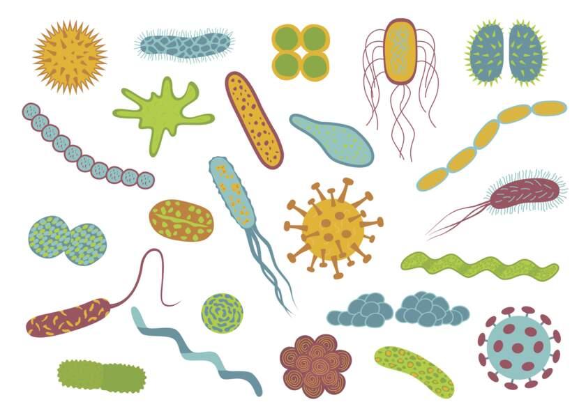 Faire une cure de probiotiques