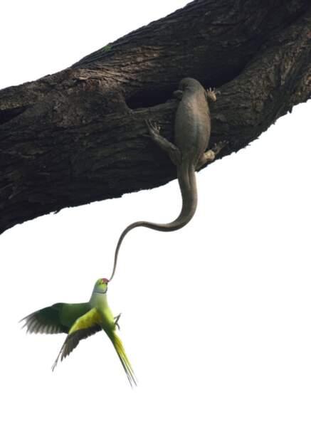 """Premier prix catégorie """"oiseaux"""", Ganesh H. Shankar"""
